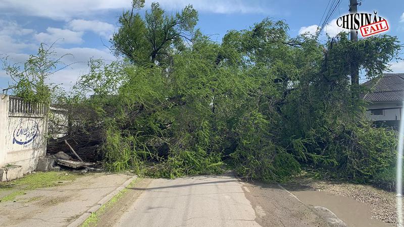 copac răsturnat | Sursa: facebook//chisinau.fail